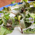 spring weeds on plate